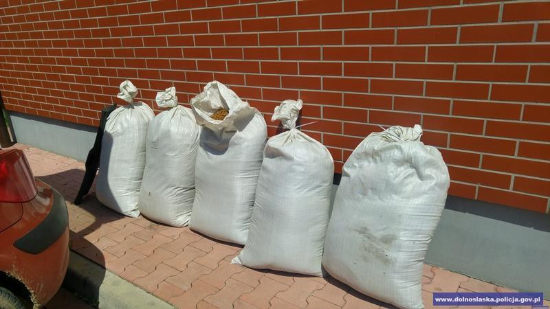 Zabezpieczono blisko 100 kilogramów nielegalnego tytoniu
