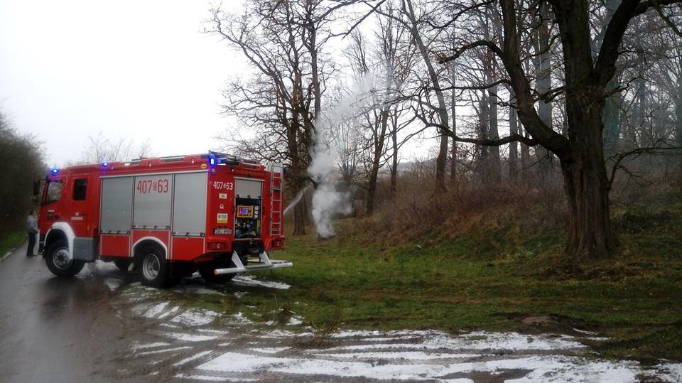 Płonące drzewo wRaciborowicach