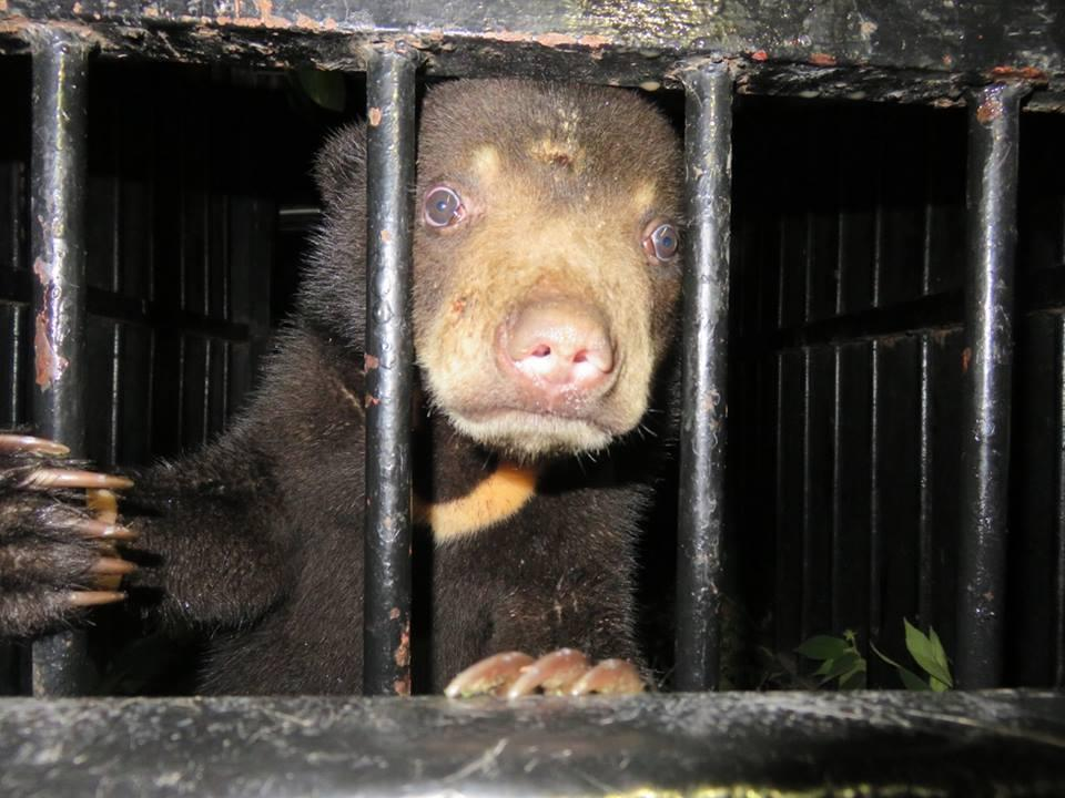 Pierwszy Międzynarodowy Dzień Niedźwiedzi