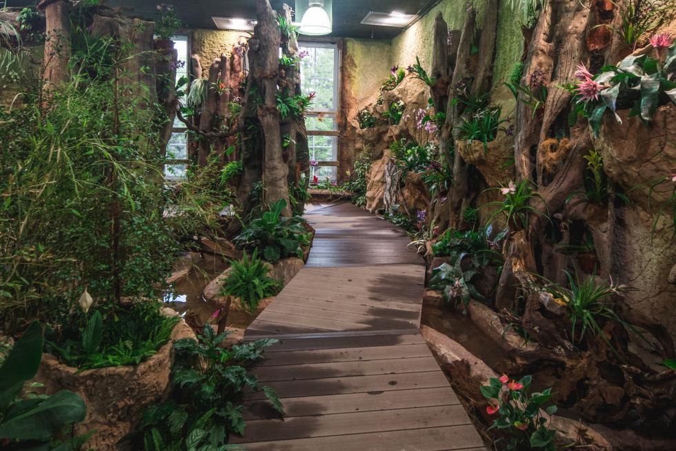 Ponowne otwarcie Motylarni wewrocławskim zoo