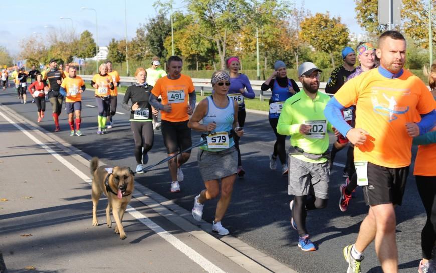Legniczanie pokazali swoją moc wLegnickim Półmaratonie iLegnickiej Dziesiątce